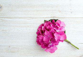 hydrangea flower on wooden surface