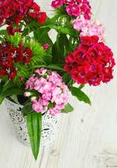 small carnation (dianthus barbatus) flowers on wooden surface