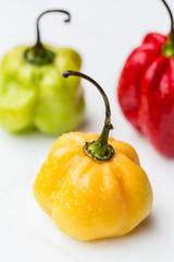 Pimenta Antillas hot chili pepper