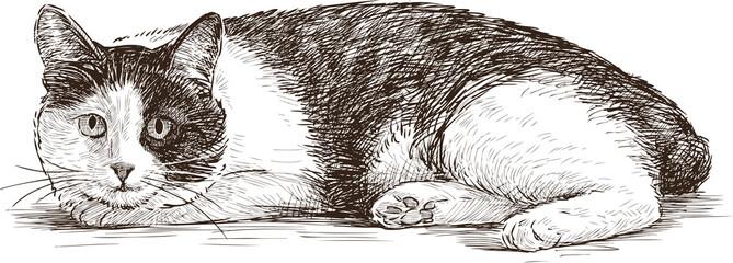lying cat watching