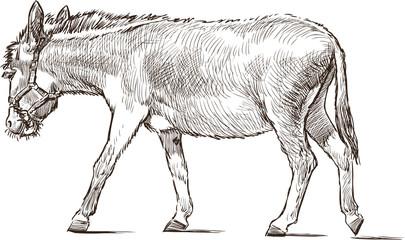 striding donkey