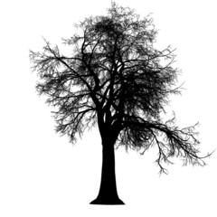 tree leafless detailed silhouette