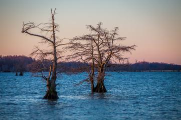 Sunrise at Reelfoot Lake