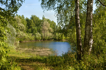 summer pond in the birch forest in Russia