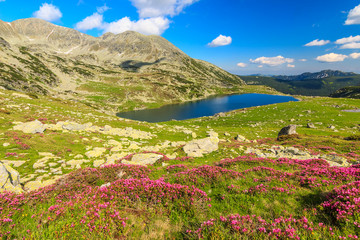 Mountains,pink rhododendrons and glacier lake,RetezatRomania