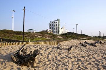 Driftwood on Sand Dunes at Durban's Beachfront