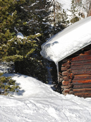 snow-covered wood house and fir tree in Dolomites