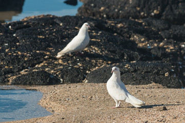 pair of white doves on sandy beach