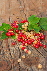Red and white currant and green leaves on wooden background.