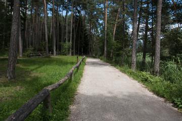 sentiero presso il laghetto di Fiè