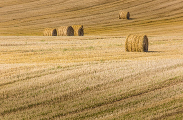 Hay bales on the field after harvest, Poland