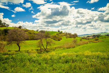 green meadow in the central Sicily