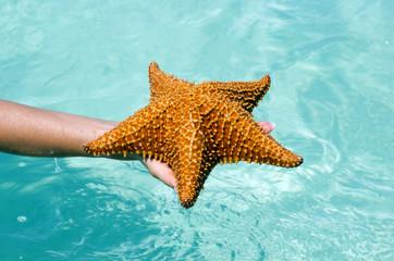 Starfish in hand
