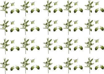 frutto jojoba