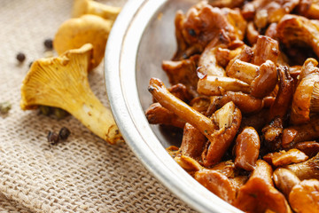 Cantharellus cibarius, commonly known as the chanterelle,