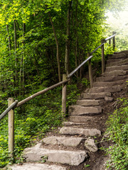 Staircase in the forest