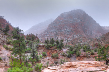 UT-Zion National Park