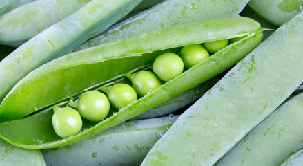 fresh pea background