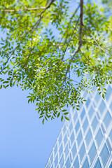 新緑のオフィス街