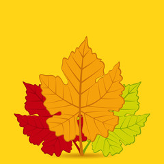 autumn leaf background square
