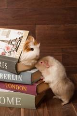 deux cobayes sur une pile de livre