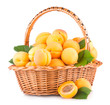 fresh apricots in a basket isolated on white background