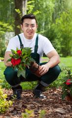Gardener removing flower from pot