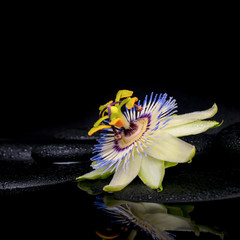 beautiful spa setting of passiflora flower on zen stones with re