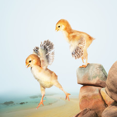 2 Chicks Jumping Off The Seaside Bluffs