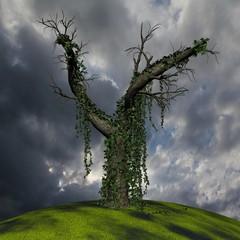 Alter Baum mit Efeu