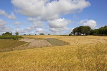 patchwork summer fields