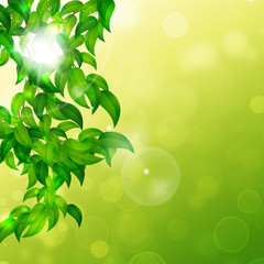Nature Bright Background