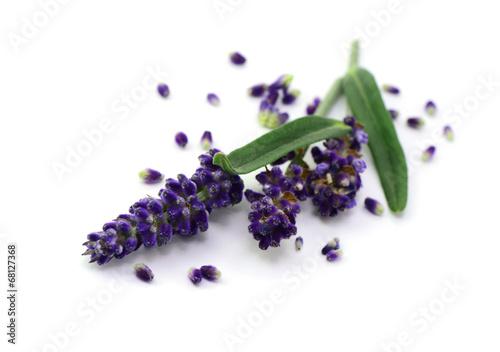 Fotobehang Lavendel Blüten