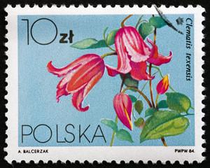 Postage stamp Poland 1984 Crimson Clematis, Climbing Vine