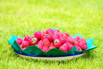 A dish of strawberries standing on the grass. Summer vacation co