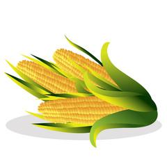 Cauliflower vector illustration.