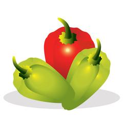 Sweet pepper vector illustration.