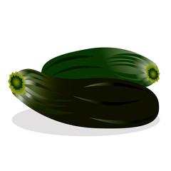 Zucchini vector illustration.