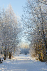 Snow-covered trees next to a snowy footpath at a sunny day
