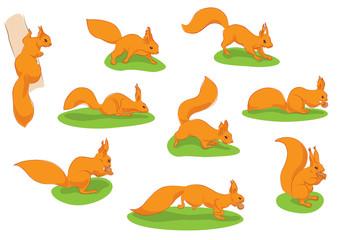 squirrels in motion