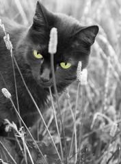 Schwarzweißfoto einer Katze mit grünen Augen