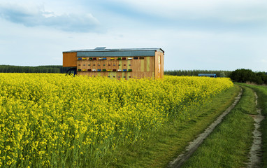 Beekeeper's truck at rapeseed canola field collecting nectar