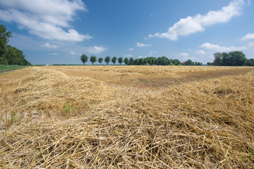Dutch farmland with harvested wheat