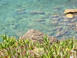 vegetazione mediterranea di fronte al mare
