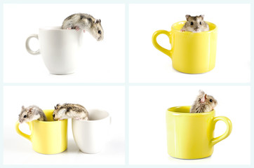 Collection of Little hamsters sitting inside a cup