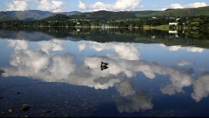 Mallard duck Lake District Cumbria England UK Ullswater