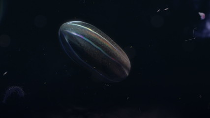 Plankton Iridescent in deep sea