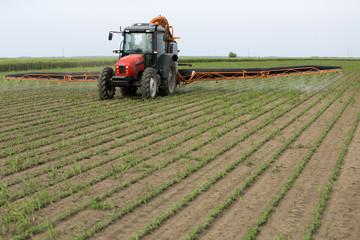 Spraying soya bean field at spring