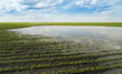 Agricultural disaster, flooded soybean crops. - 68140949