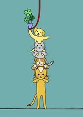 協力、犬と猫